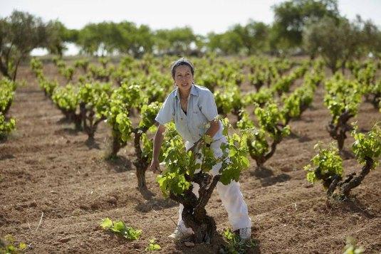 Biowinzer - Heiner Sauer - Weingut Spanien Arbeiter