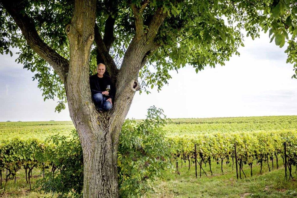 Weinstrasse - Bio Winzer Heiner Sauer - Baum
