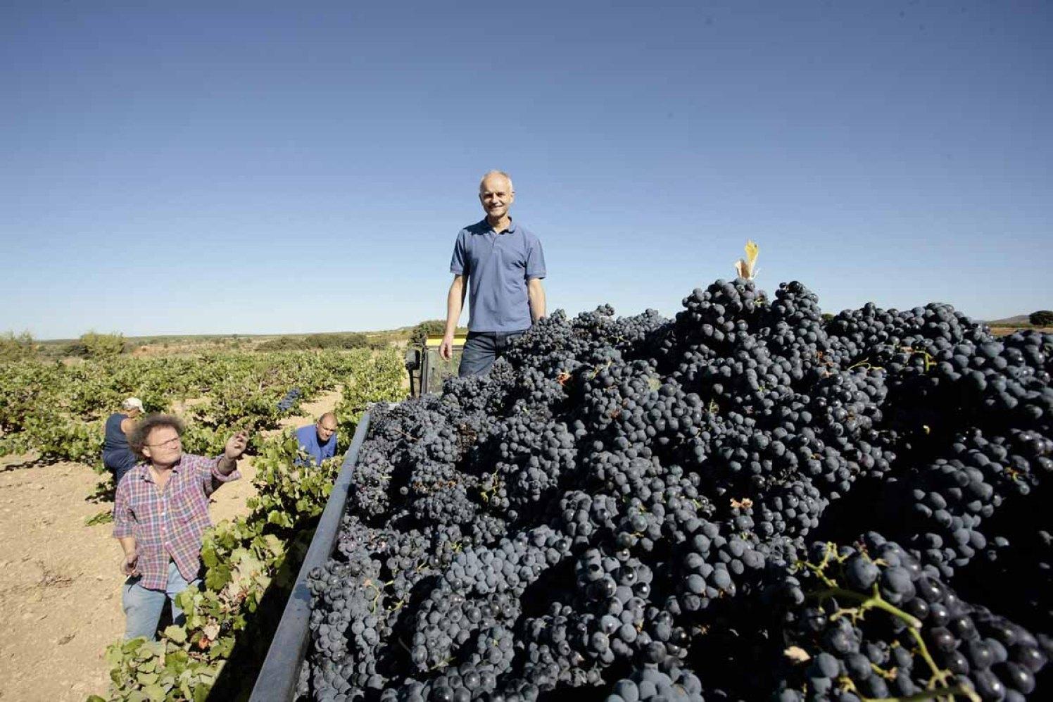Weinstrasse - Biowinzer Heiner Sauer - Weingut Spanien Ernte