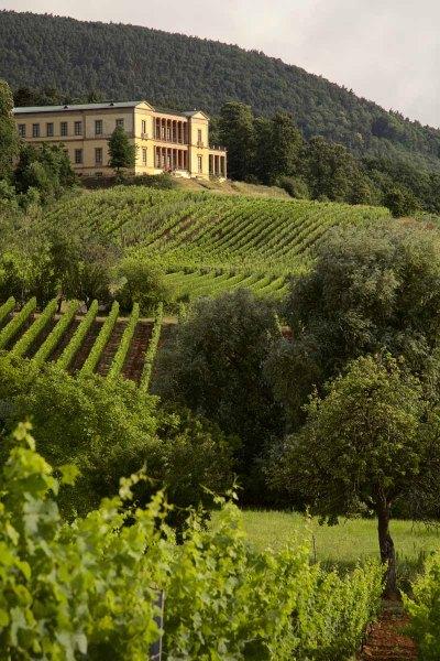 Deutsche Weinstrasse Villa Ludwigshöhe Reben Weinlandschaft