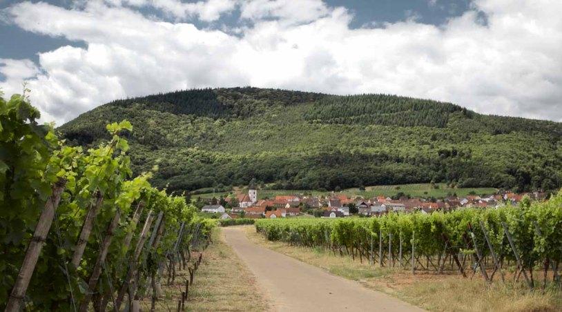 Deutsche Weinstrasse historisches Winzer Dorf - Dorf in Reben