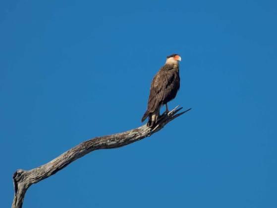 Vogel im Pantanal