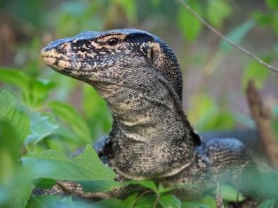 Tierwelt Raja Ampat