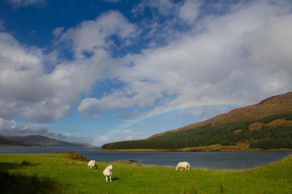 schottische-highlands-natur