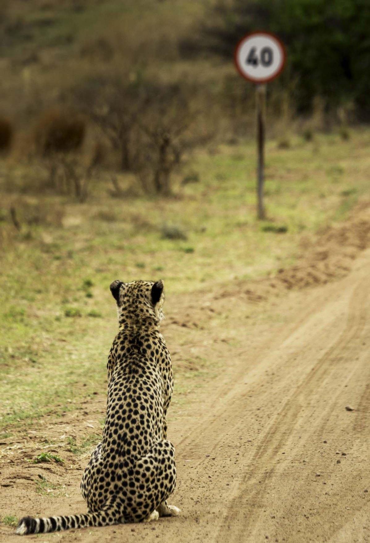 © Vaughan Jessnitz, comedy wildlife photo awards 2016