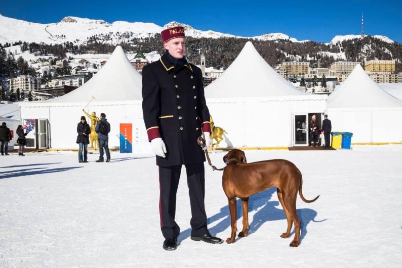 The Swiss Moritz