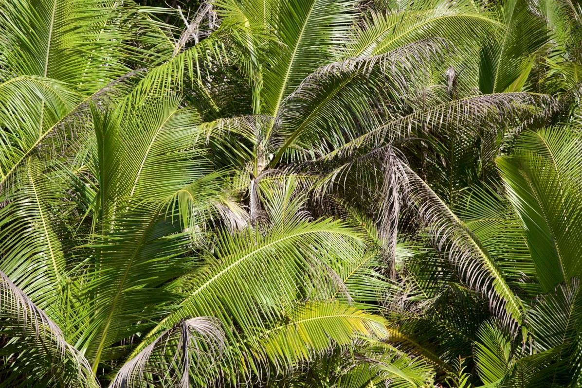 Seychellen La Digue 01