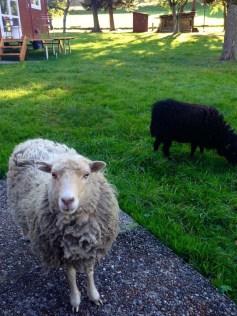 Charmante Unterkünfte Schweiz: Bullerby