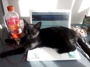 Muscade le chat qui profite du soleil couché sur mon clavier de laptop