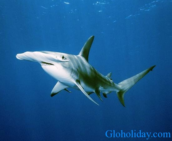caring shark
