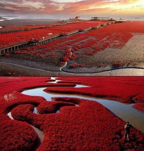 Red Beach ,Panjin, China