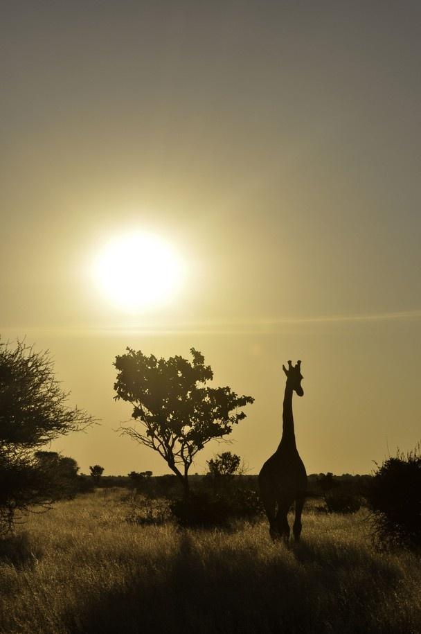 Central Kalahari Game Reserve, Botswana2