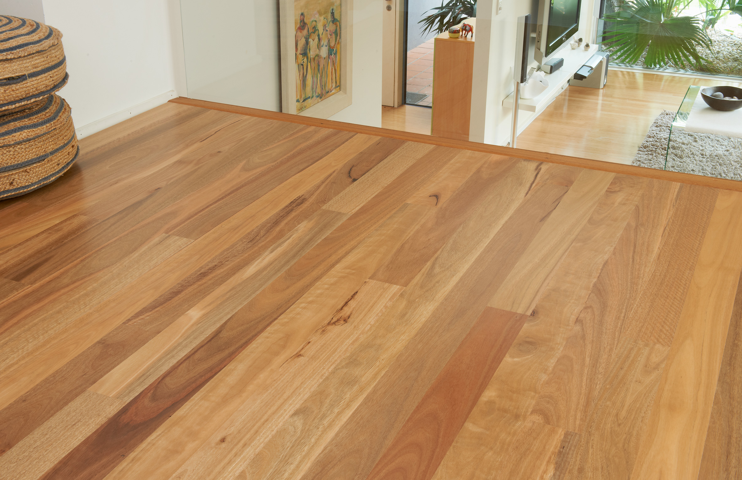 Spotted Gum  Ecorymbia Maculata  Gloria Timber Flooring