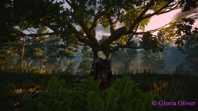 Witcher 3 - White Orchard
