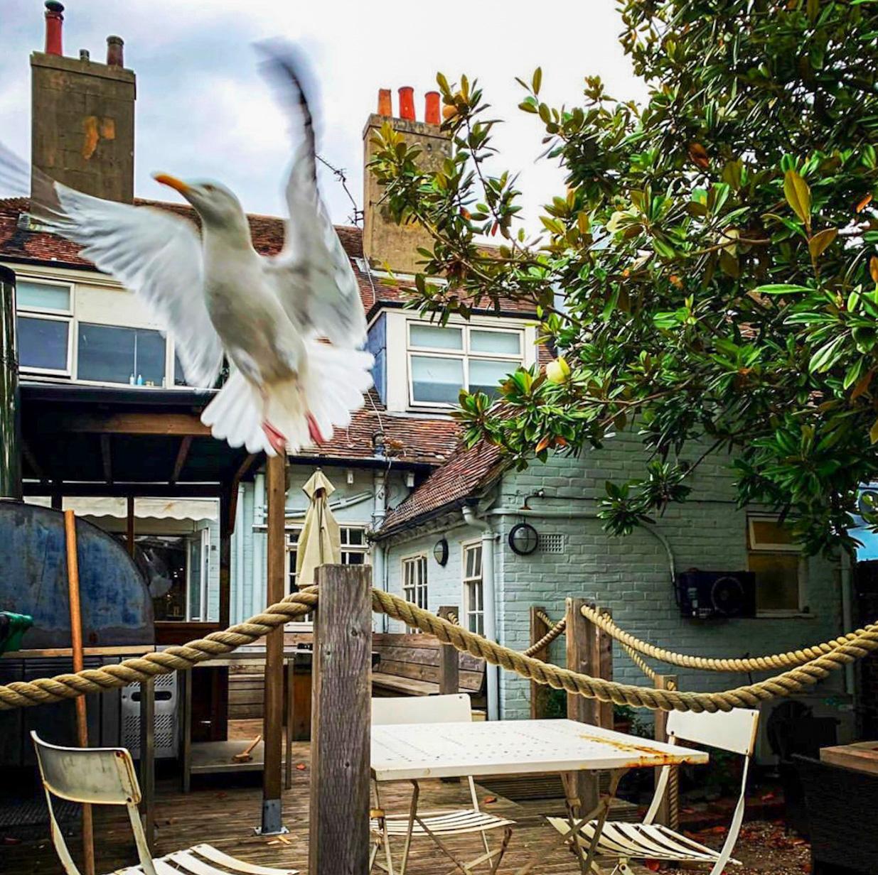 Deal seagull pub