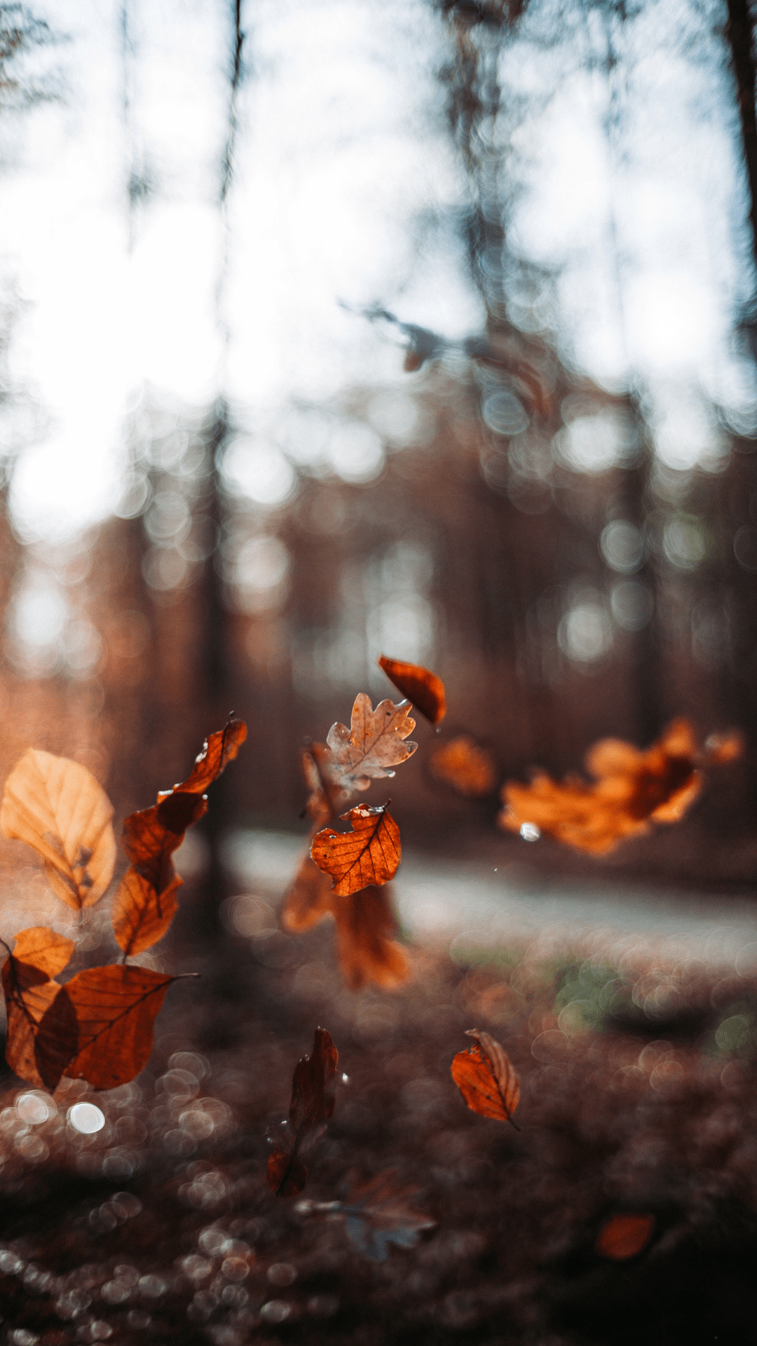 Free HD Autumn Wallpapers