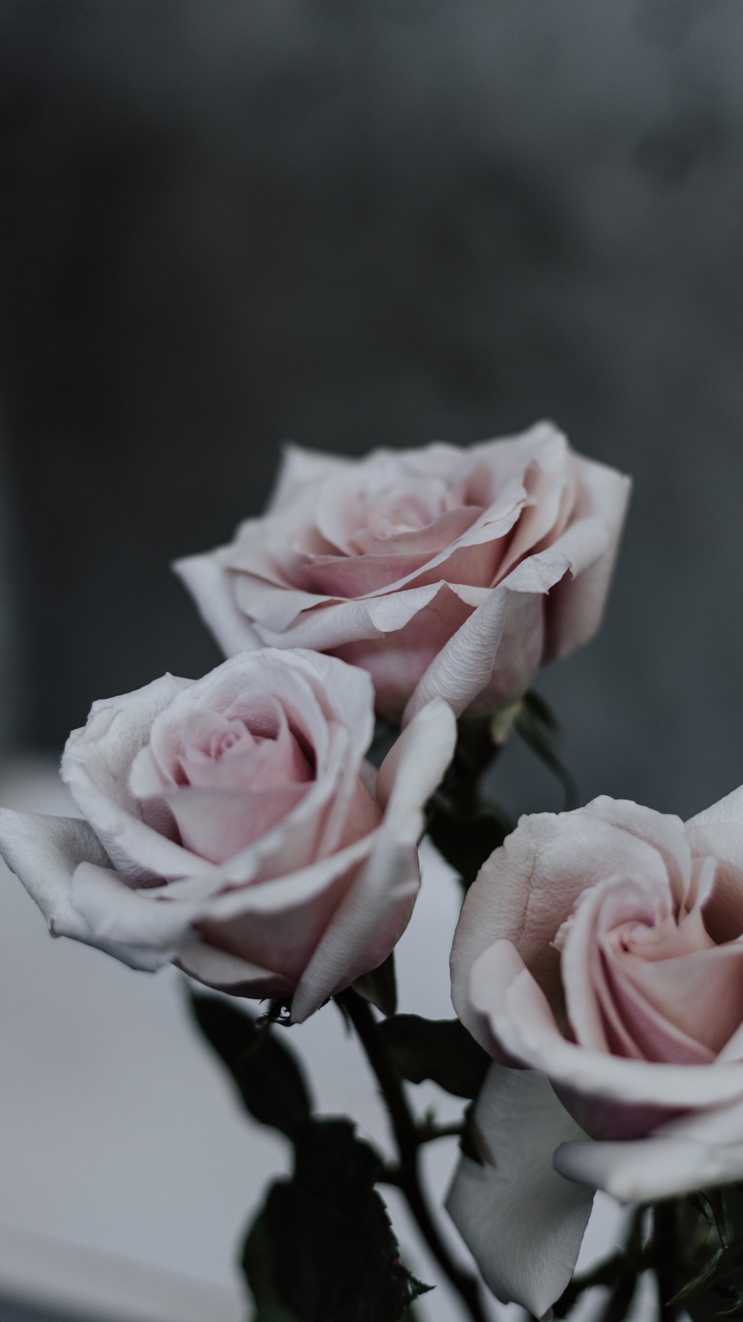 pink rose aesthetic background