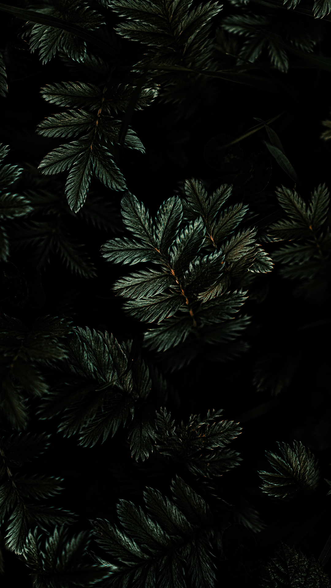 dark botanicla wallpaper