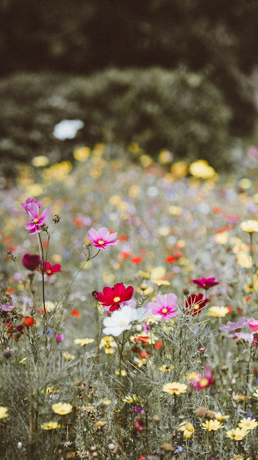 flower field meadow