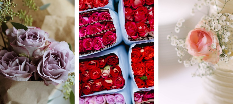 free HD rose flower wallpaper backgrounds