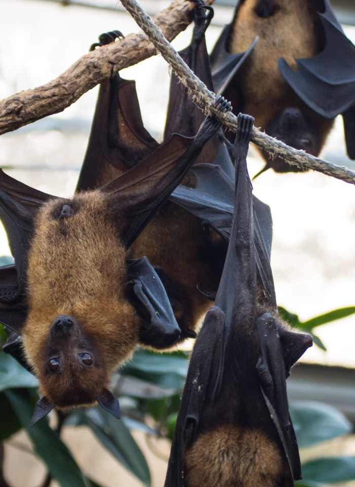 A Huge Collection Of The Best Bat Puns And Jokes