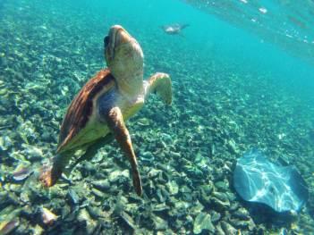 Snorkel & Dive Belize