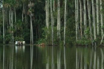 Inkaterra Amazonica in Peru.