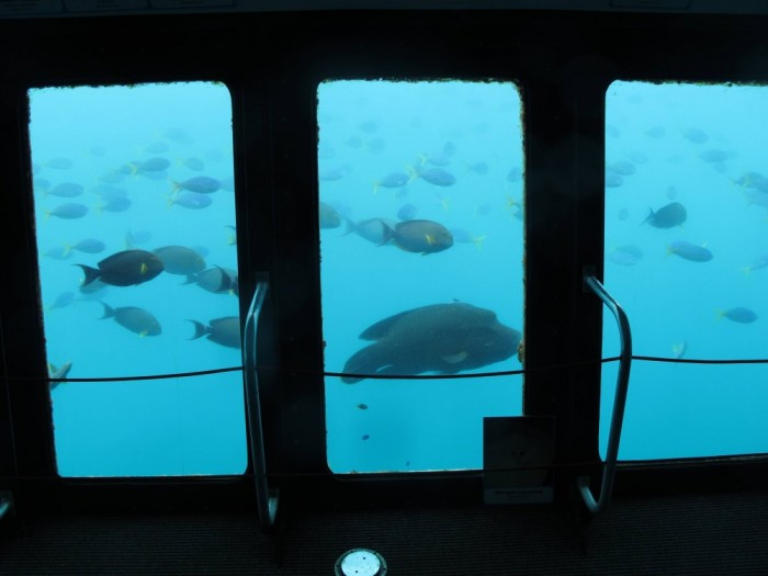 Ganz ohne nass zu werden kann man die Fische am Schaufenster der Station sehen.