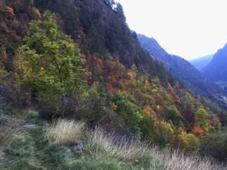 Herbstliches Farbenspiel im Schnalstal.