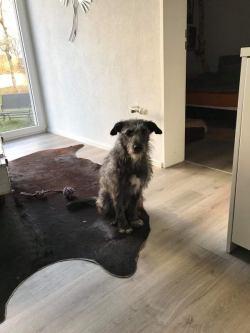 Luca-Zuhause gefunden3