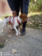 Reisende Hunde 18.09.2020-6jpg