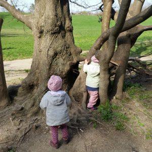 Foto Kinder bei Bäumen