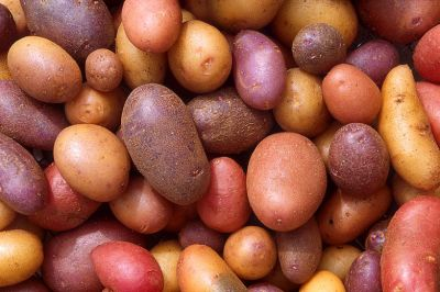 potato_types