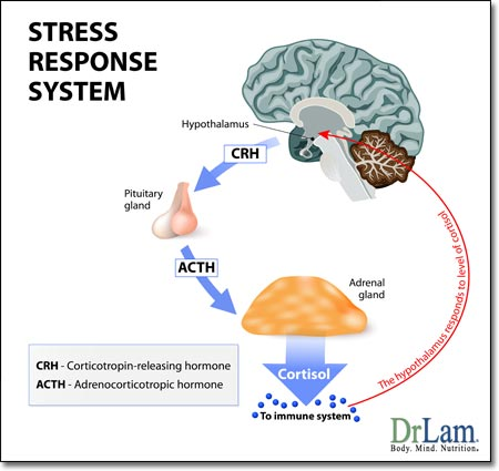 stress-response-system-adrenal-fatigue-5
