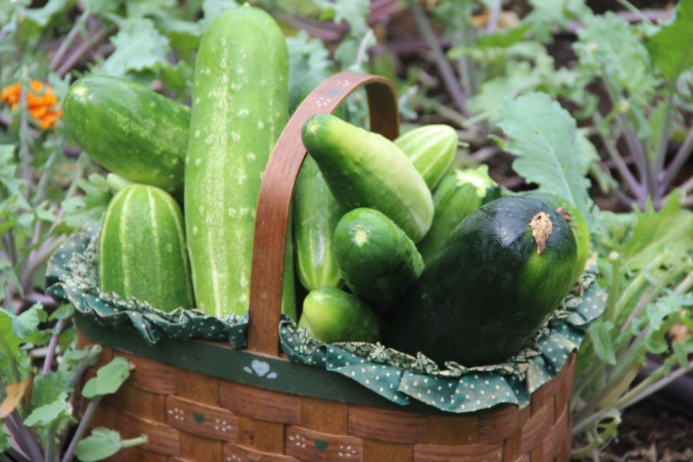 Pass the veggies, please (cucumber salad recipe)
