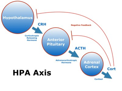 HPA AXIS Pic.001