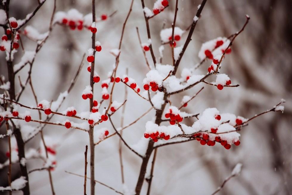 winter, humidity, health, gluten free homestead
