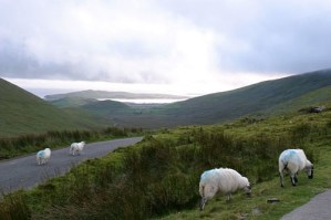 Road in Kerry