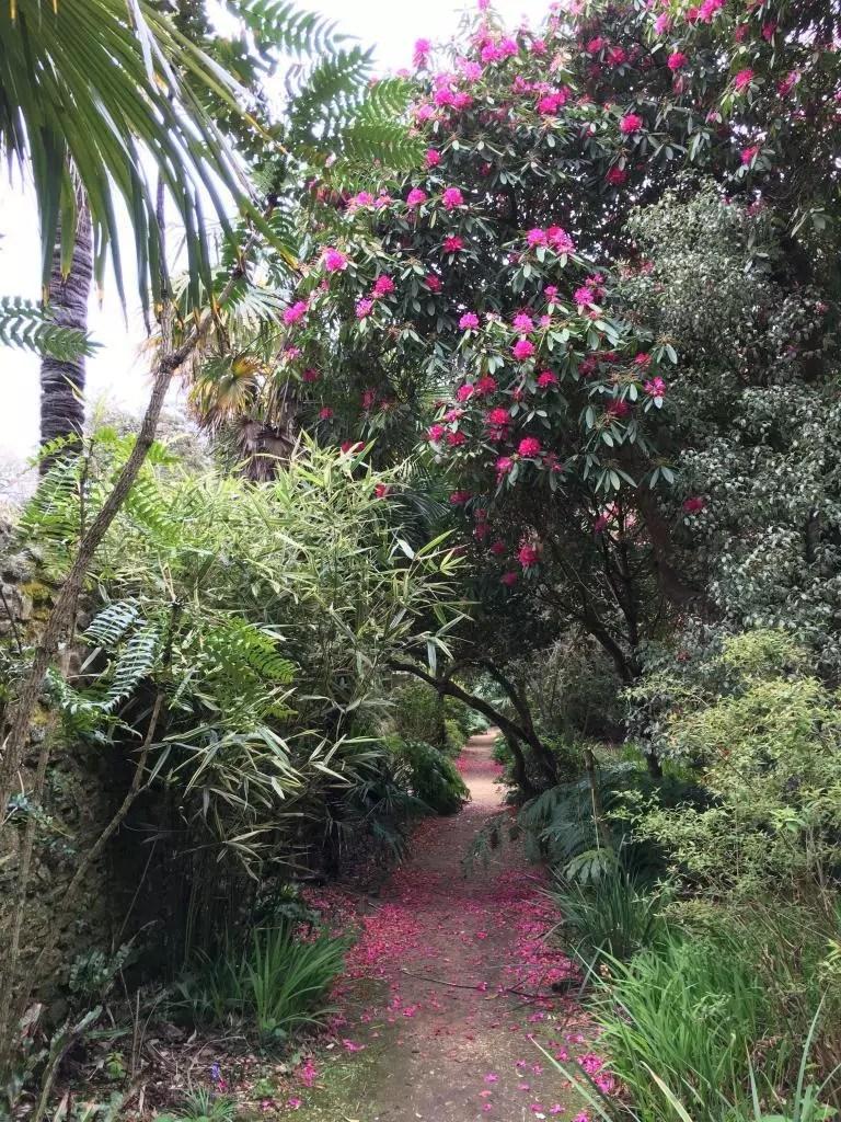adventures of a gluten free globetrekker Gluten Free Dorset: Abbotsbury Subtropical Gardens Dorset