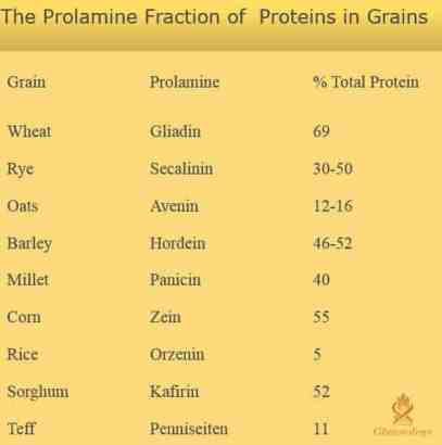 Gluten composition of grains