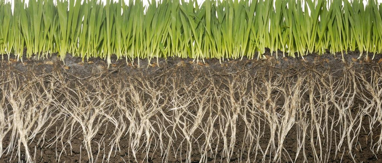 Le Micorrize una nuova era per la coltivazione
