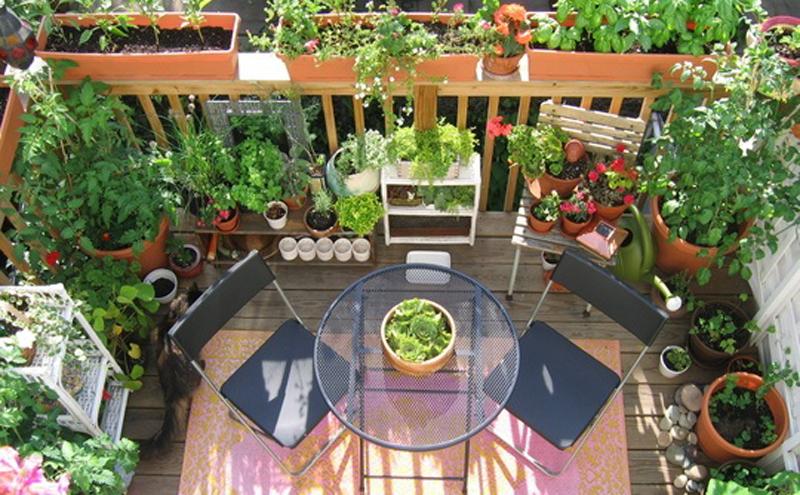 Come coltivare gli ortaggi in vaso sul balcone di casa