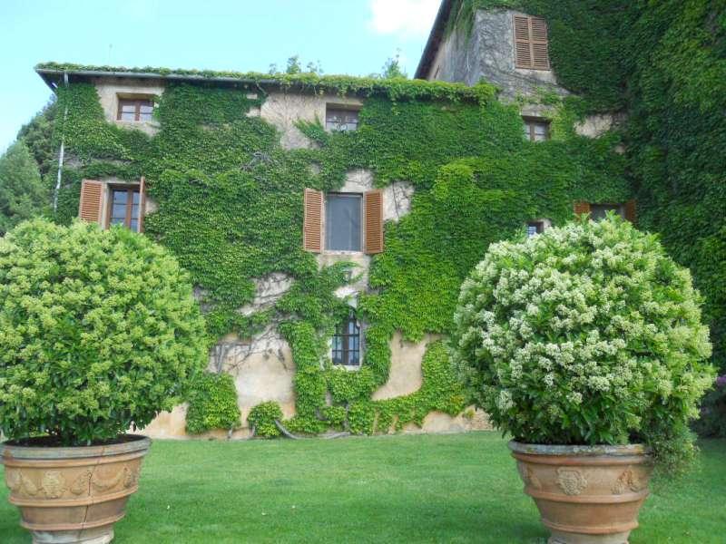 Le viti americane  GIARDINAGGIO MAGAZINE La rivista online dedicata al giardino