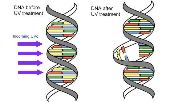 Image result for uv filtration dna