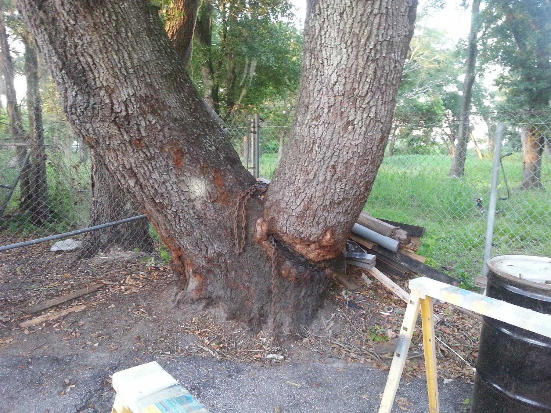 puller tree 4
