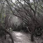 Five Fantasy Forest Features