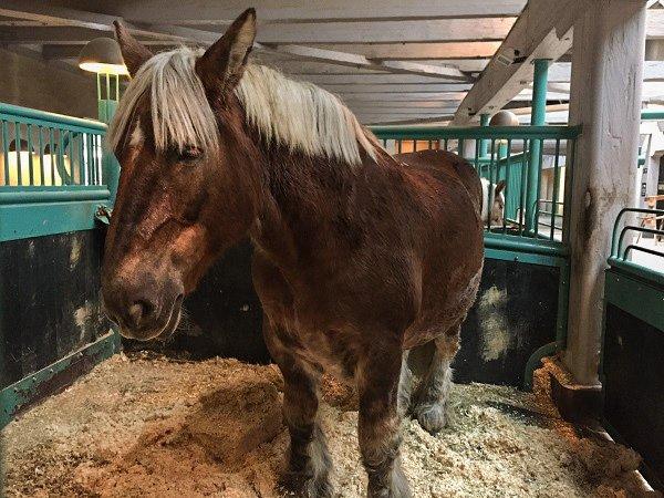 Carlsberg brewery horse