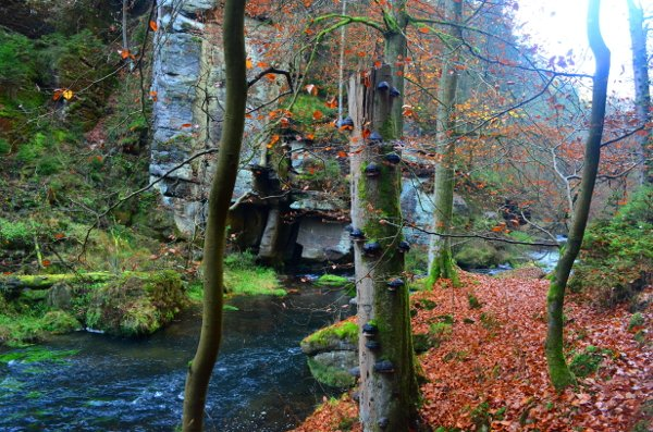 bohemian switzerland day trip