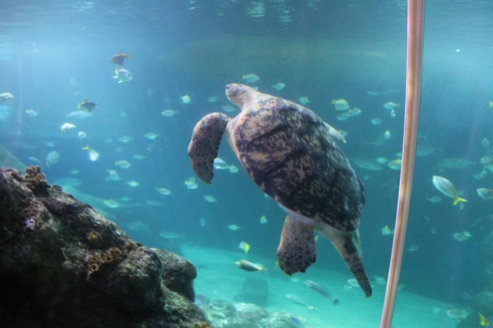 Sealife schildpad