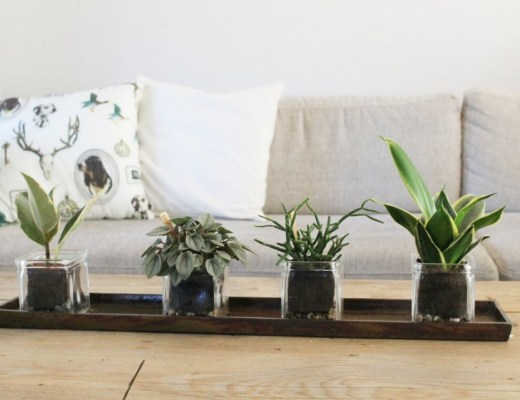 plantjes om je huis op te vrolijken